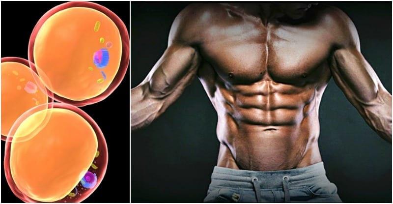 best fat burners for abs to get shredded