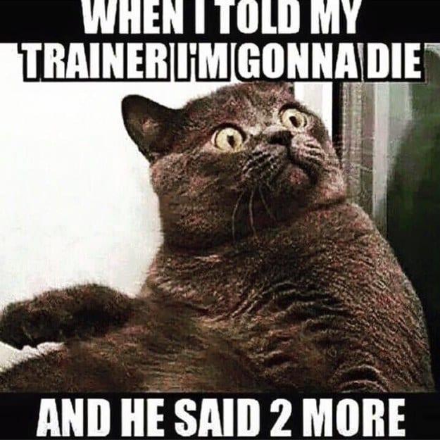 gym partner