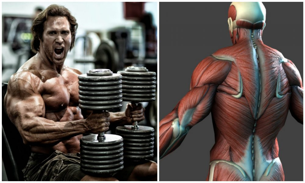 4 things about building muscle