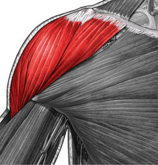 8 Reasons You Can't Build Boulder Shoulders