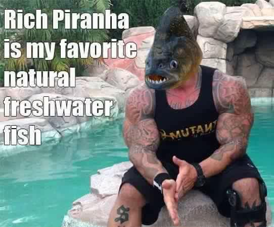 rich piana meme17