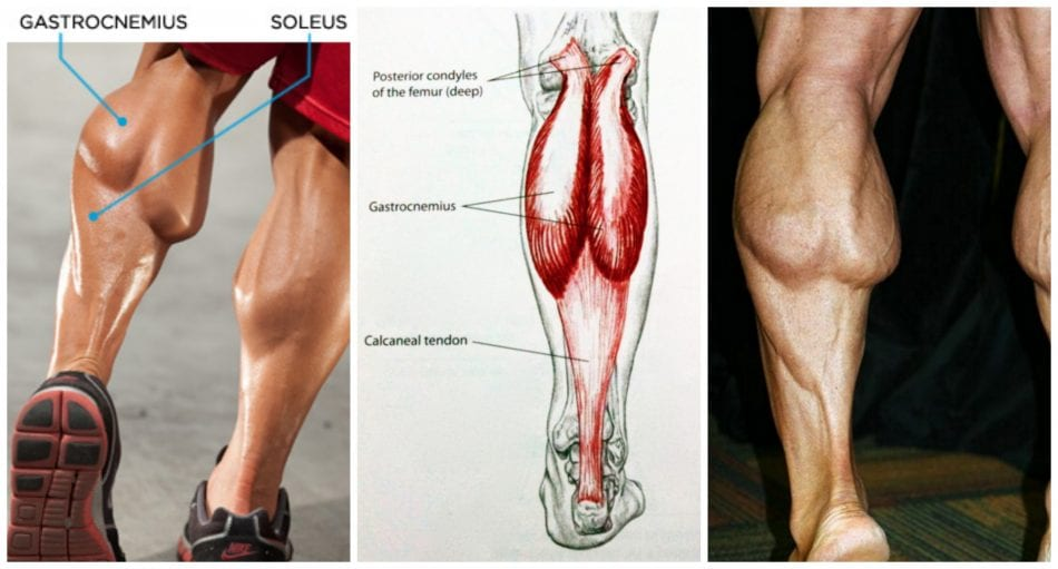 Building Big Calves At Home