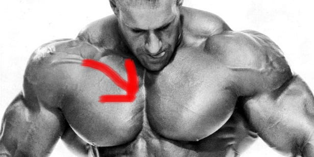 Chest Workout Notes For Beginners