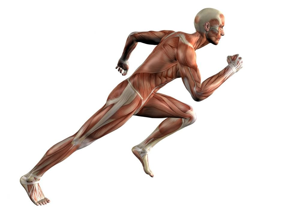 hiit vs steady state cardio which is better