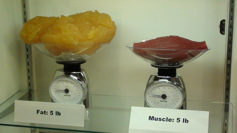 is fat heavier than muscle