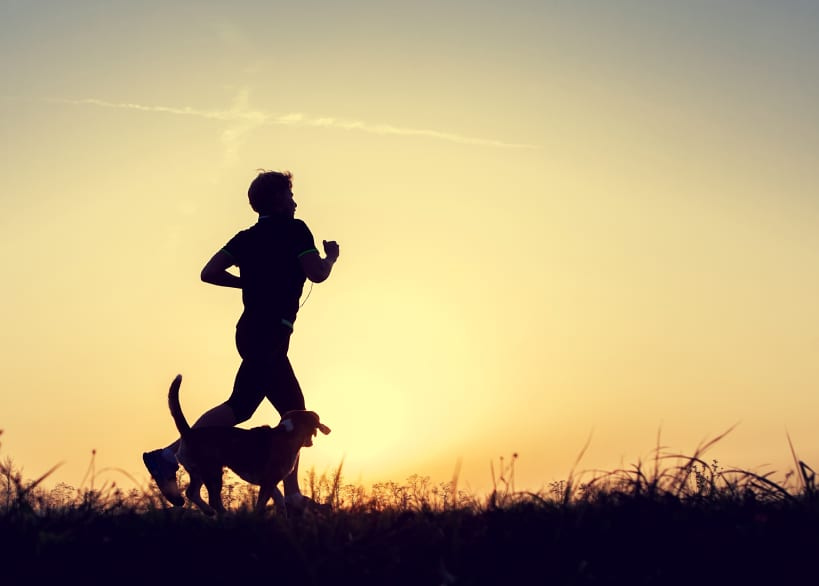 Evening jogging walk with a dog silhouettes