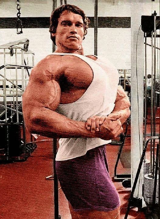 Arnold's Chest