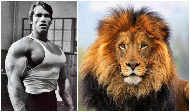 alpha-lion1