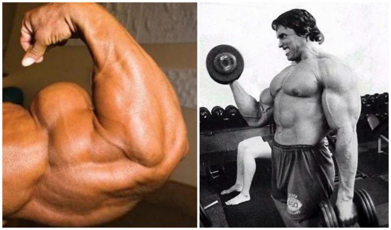 gain-mass-in-biceps