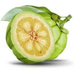 clenbutrol ingredients: garcinia cambogia