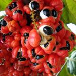 clenbutrol ingredients: guarana seed extract