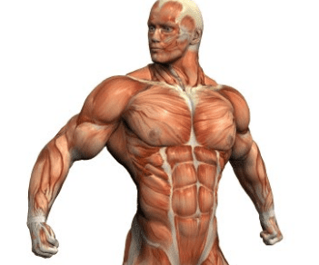 How To Gain Pure Muscle Without Losing Your Six Pack
