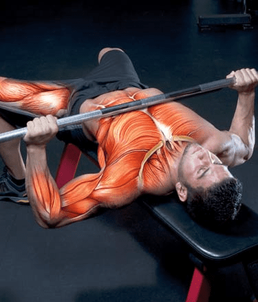10 Day Workout & Diet Plan To Add 2 Pounds Of Muscle