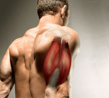 Cortisol The Muscle Destroying Hormone – How You Can Lower It