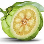 garcinia cambogia fat burner for women