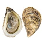 oysters boost testosterone in men fast