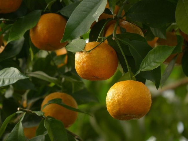 Lipo 6 Black Hers orange