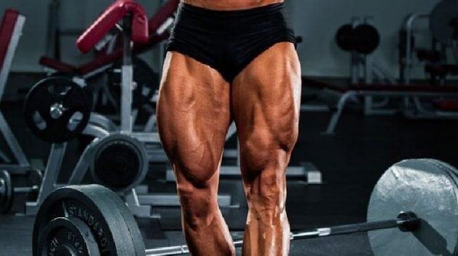 quad muslces