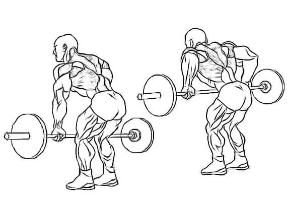 how to do bent over barbell row to build muscle - muscle building workout program
