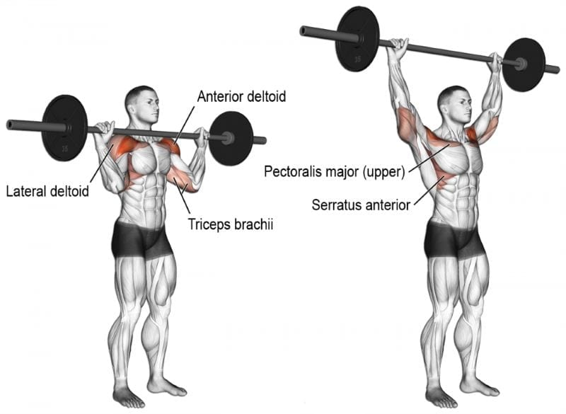 how to do standing barbell press to build muscle naturally - muscle building workout routine
