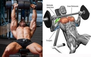 Barbells vs Dumbbells: Which is better for building muscle?