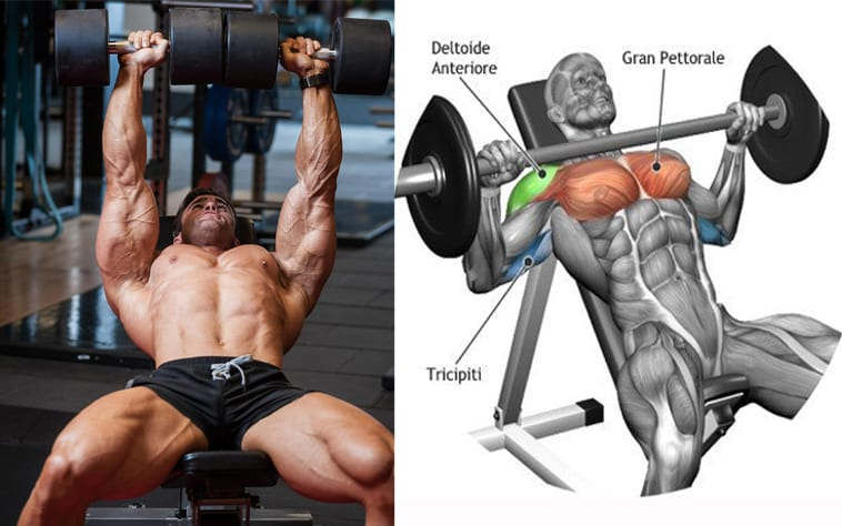 barbell vs dumbbell for muscle building