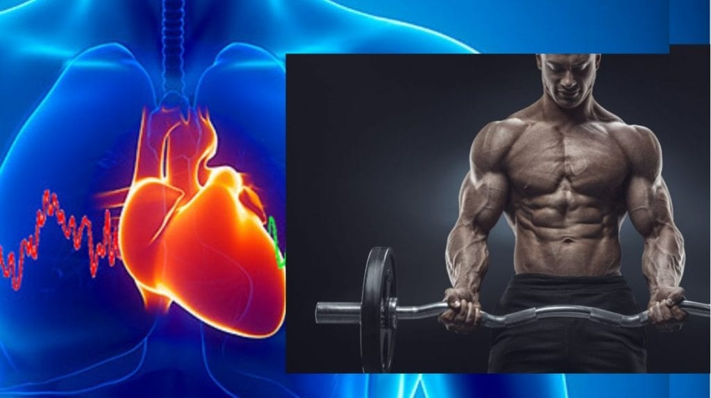 heart rate variability to build muscle