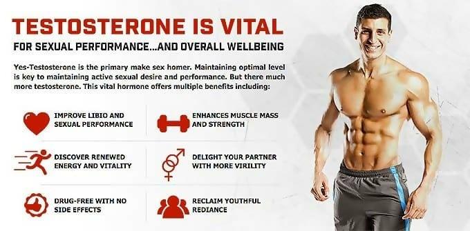 Testosteron spielt im Muskelaufbau die höchste Rolle