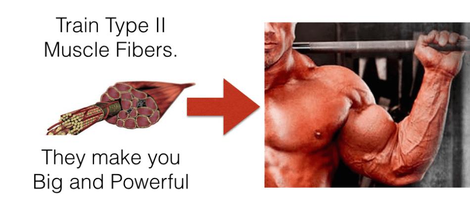 type-2 muscle fibers