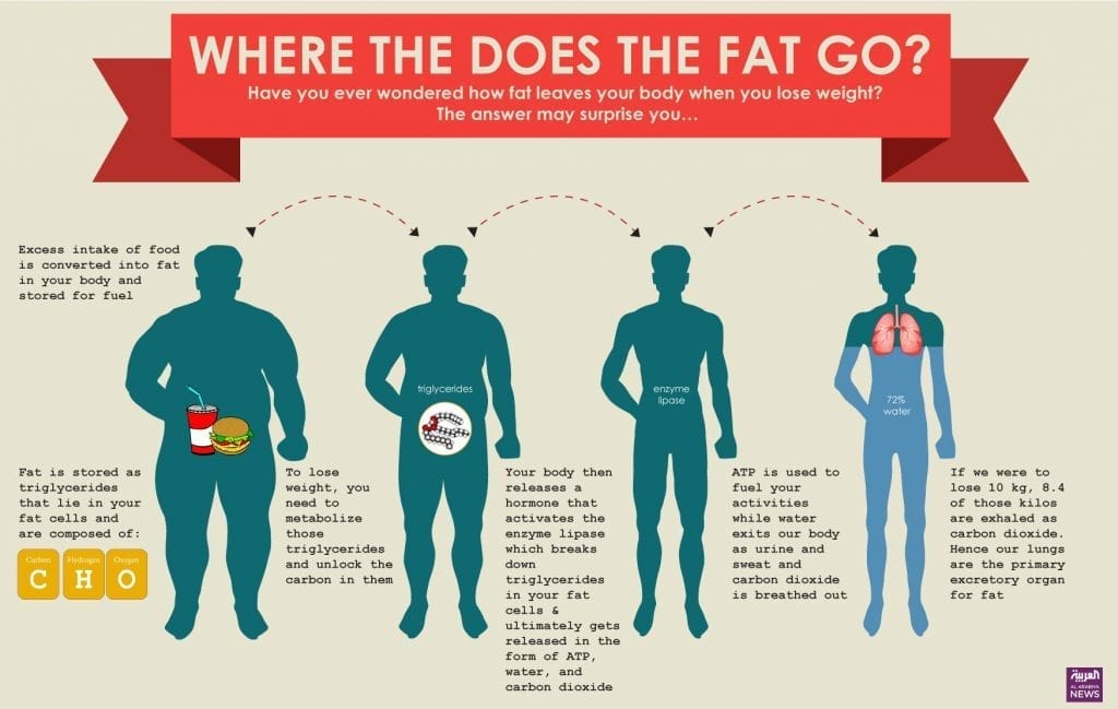 where does fat go