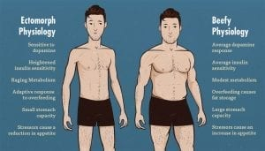 ectomorph vs mesomorph