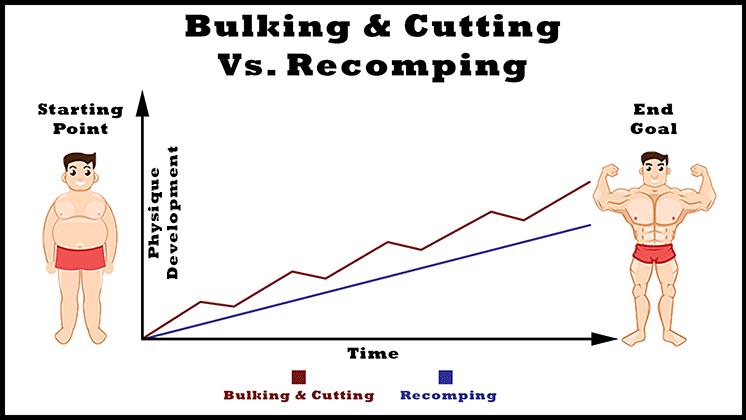 bulking and cutting