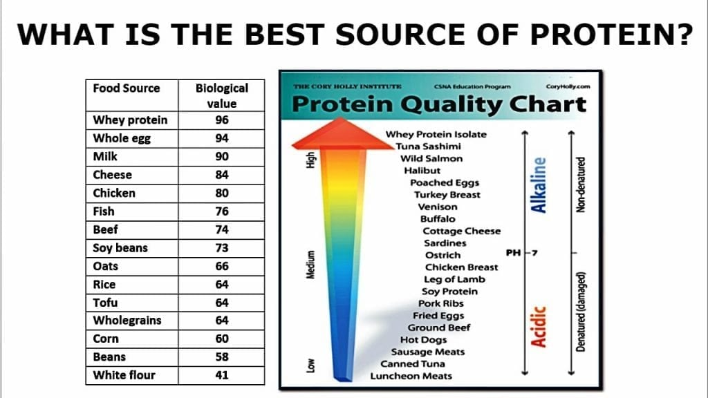 biological value of proteins