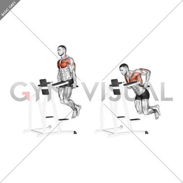 parallel bar chest dip