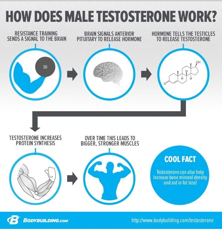 how does testosterone work