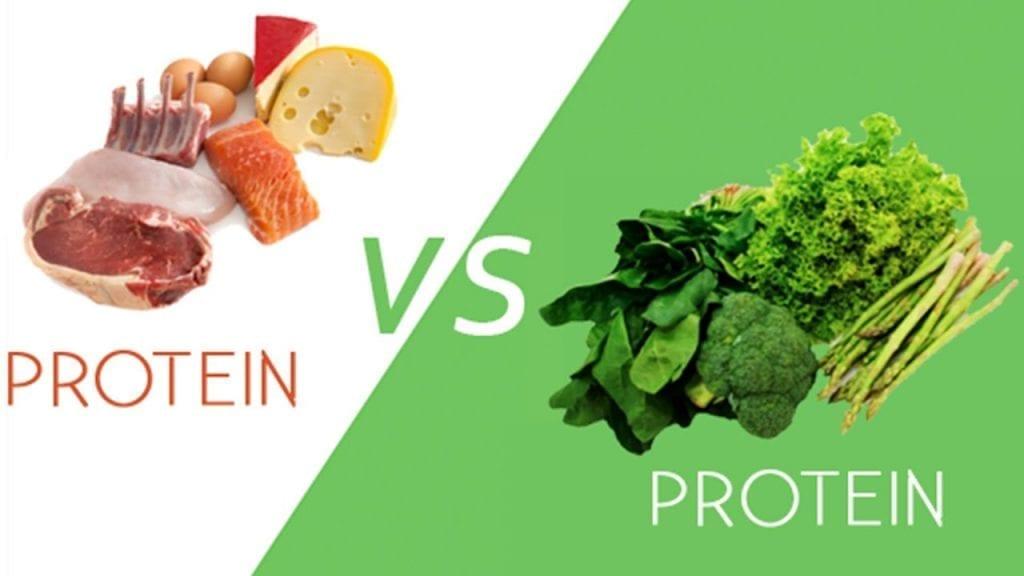 plant protein vs animal protein