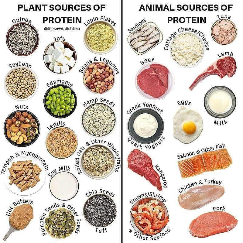 why protein is important to burn carbs fast