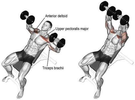 Incline dumbbell bench press upper chest exercises