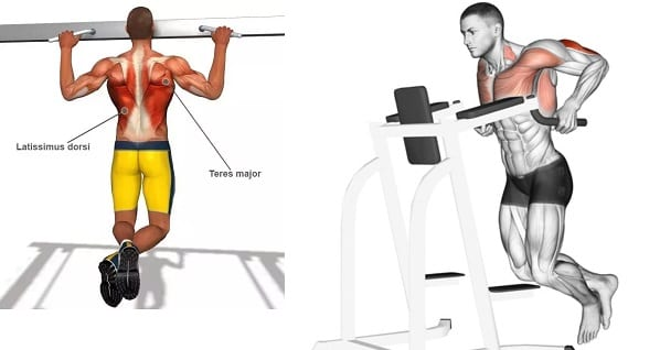 dips and pull ups for superset chest and back workout