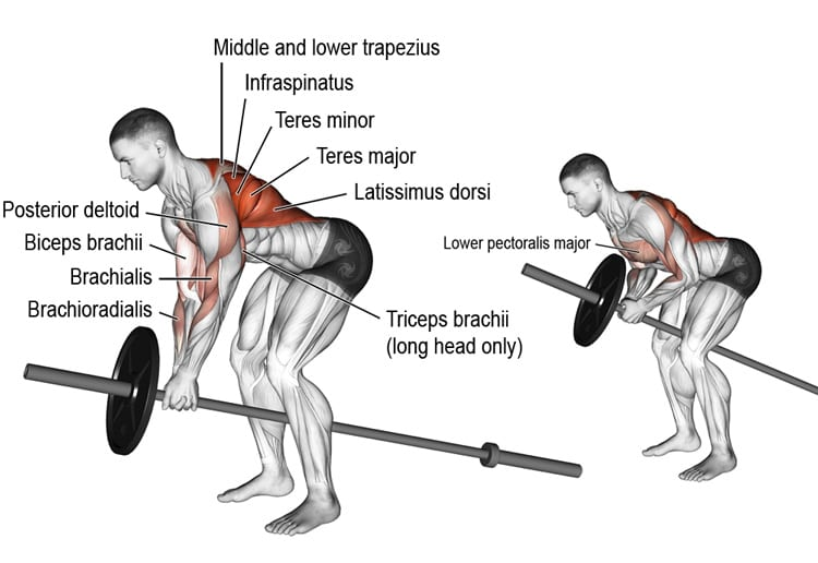 t bar row for back workout